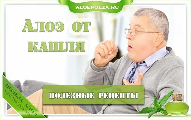 Лечение кашля соком алоэ и медом: рецепты при простуде