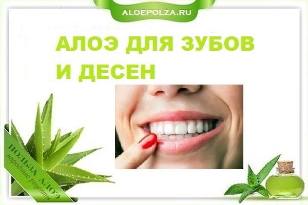 Алоэ для зубов и десен